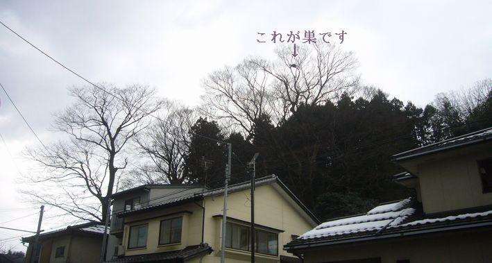 20120209-2.jpg