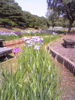 柳田植物園